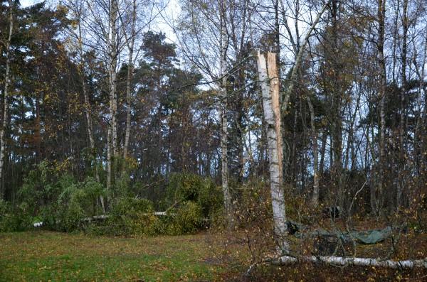 stormen-träd - Kopia