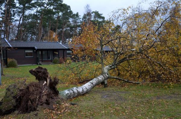 stormen-träd-vstugor